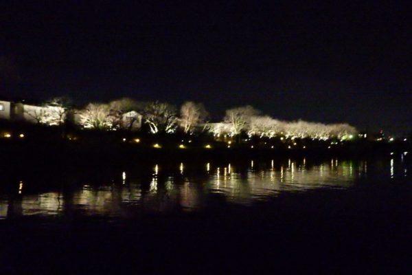 富岩運河桜ライトアップ工事